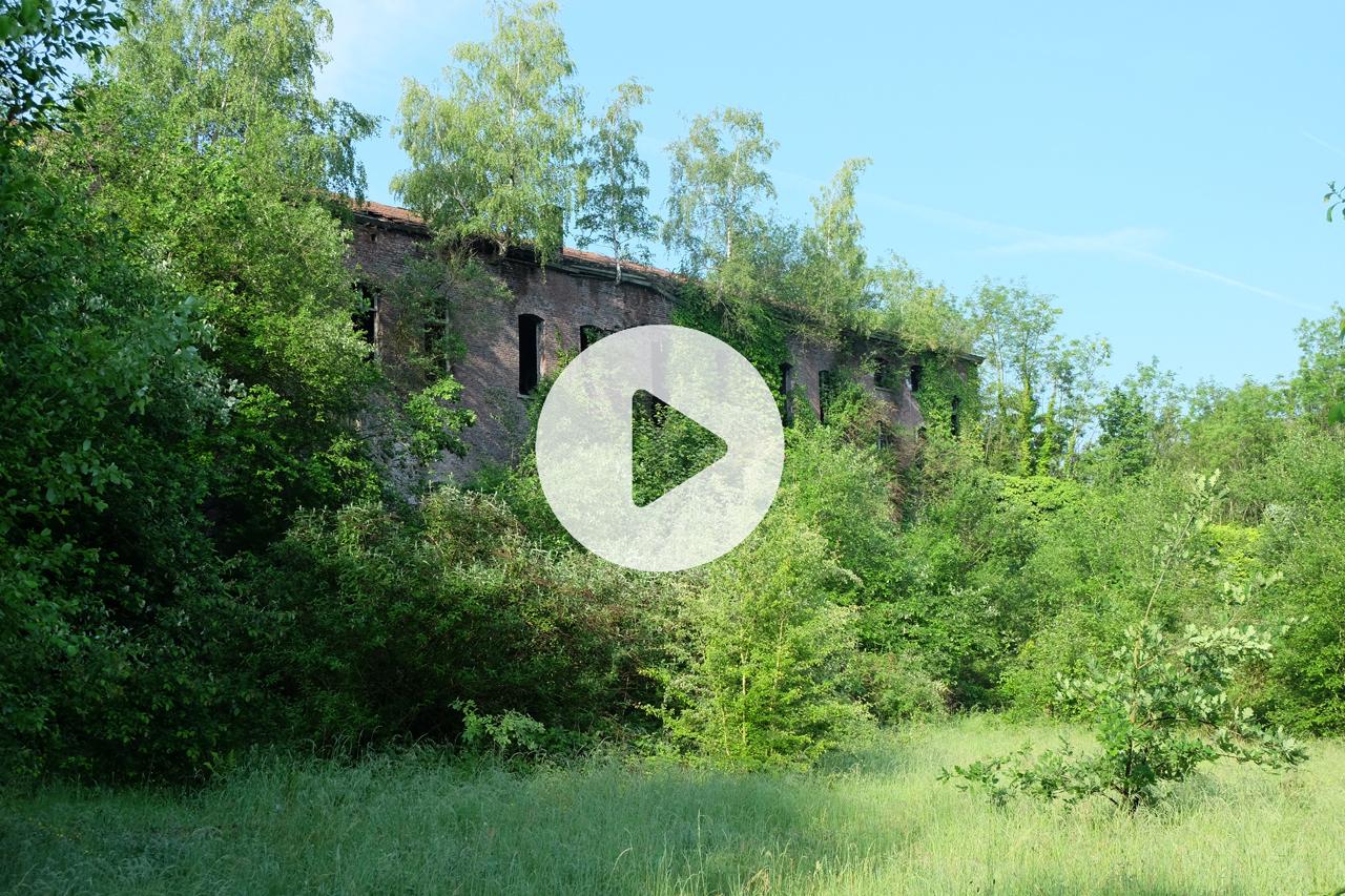 Vidéo de la Chartreuse